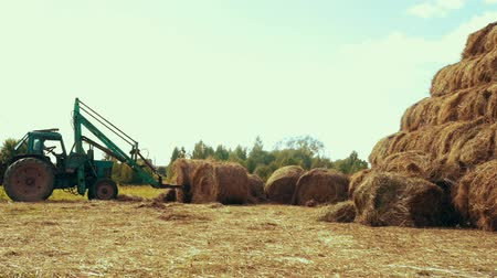 hay pile : Agricultural tractor transporting straw rolls on rural field. Farming industry