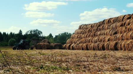 hay pile : Farming tractor loading hay stacks on agricultural field. Agricultural industry