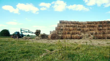 hay pile : Agricultural tractor heaping hay stacks on farming field. Farming industry Stock Footage