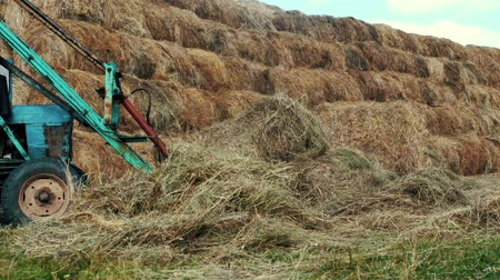hay pile : Farming tractor driving bales of straw on agricultural field. Rural farming Stock Footage