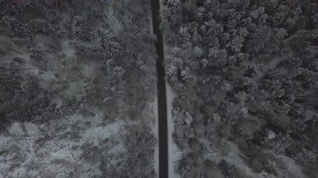 cuidado : Car traffic on winter road through snowy forest drone view Vídeos
