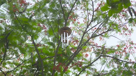 chime : Wind chime hanging on tree in garden. Feng shui wind bell on branches of tree. Feng shui symbol concept. Stock Footage