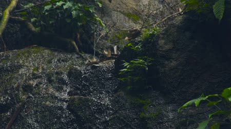 pedregoso : Water stream of creek flowing om rocks in wild tropical forest. Creek water flowing like river in mountain and jungle forest landscape. Stock Footage