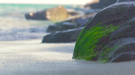 pedregoso : Big stone covered green seaweed on sea shore and splashing water waves. Mossy seaweed on large stone on sandy of sea shore and water waves background.