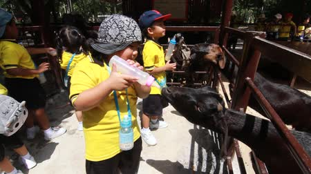jovial : BANGKOK CITY, THAILAND - JULY 2016: Kindergarten Students visit the zoo, In the jul 15, 2016. Bangkok Thailand.