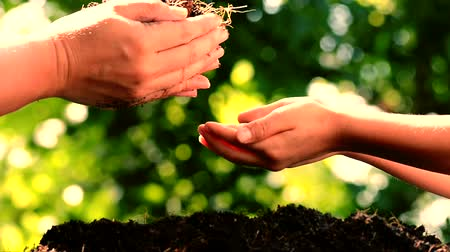 деревья : Vintage tone. Close up focus on Mother and son hand planting young seedling on black soil on green bokeh from tree background. High definition shot.