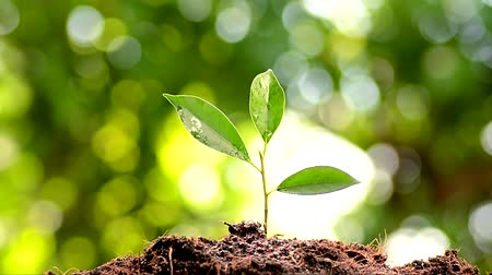 close up shot : Close up focus watering young seedling on black soil on green bokeh from tree background. High definition shot. Stock Footage