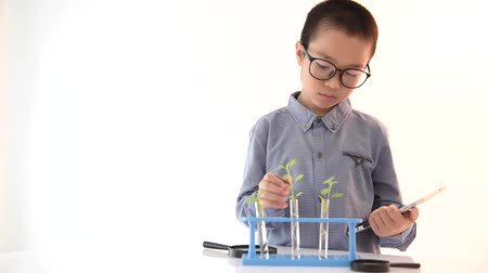 aluno : Young Asian boy check plant seedling in laboratory with table device.