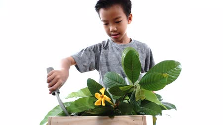 manjericão : Boy taking care young seedling and flower in a basket.