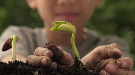 4k close up zoom out from young seedling in boy hands