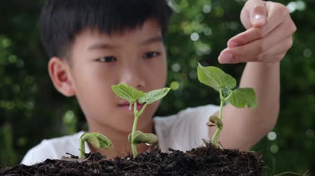 kid carry young seedling and plant into black soil Stockvideo
