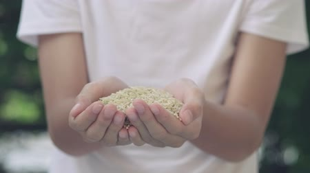 4k selective focus high nutrition brown rice drop on kid hand movement 影像素材
