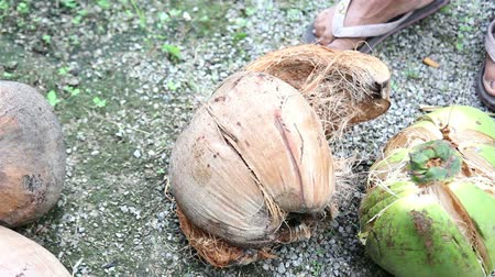 кокос : cutting off coconut fruit cover with DIY tool in Thailand