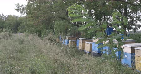 Apiary against trees