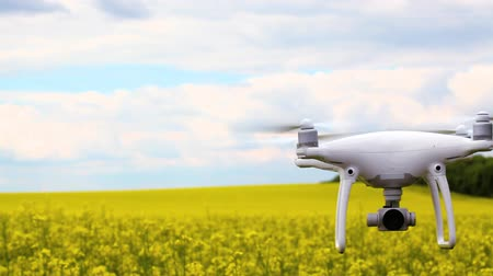 stable fly : drone flying in the yellow rapeseed field. Stock Footage