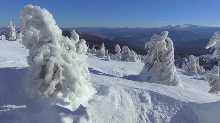плато : Snowy fir trees on a high plateau. A winter fairy tale