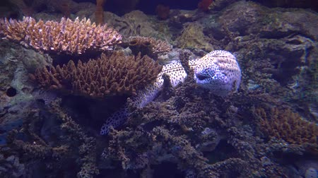 imperador : moray eel hiding in a coral reef
