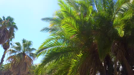 запятнанный : Palm trees at tropical coast Стоковые видеозаписи