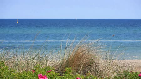 дюна : View over the dune grass on the German Baltic coast in Heiligendamm