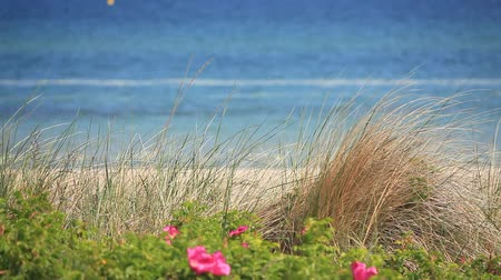 baltık : View over the dune grass on the German Baltic coast in Heiligendamm