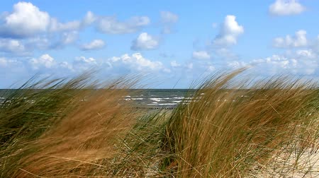 дюна : View through dune grass on the German Baltic Sea by a sand dune Стоковые видеозаписи