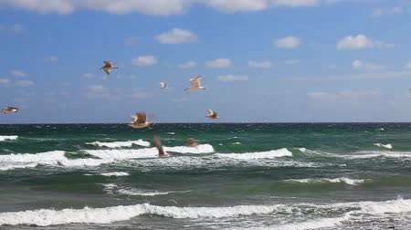 baltské moře : Many seagulls flying in front of blue sky on the German Baltic coast