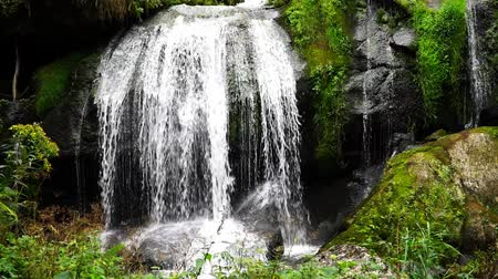 mossy forest : Waterfall in Triberg Black Forest Stock Footage