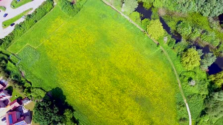 cambridge : Rape field and lakes from above, aerial view on a hot summers day