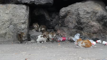 trikolóra : Hungry and tired alley cats in garbage
