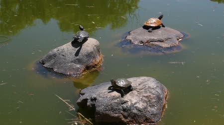 Turtles on a sunny day