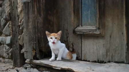 rusticana : Stray cat coming out of old wooden door hole and meow