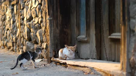 rusticana : Stray cats playing on the street in front of old, abandoned house door