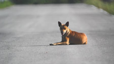 cheerless : Homeless dog on rural road