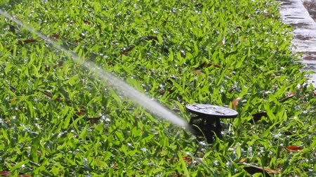 atirar : sprinkler head watering the grass. Stock Footage