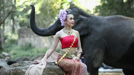 tusk : Asian woman with elephant in creek ,Chiang mai Thailand. Stock Footage