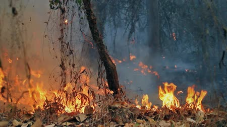 blasting : wildfire on mountain in thailand Stock Footage