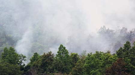 termal : wildfire on mountain , thailand (pan shot)