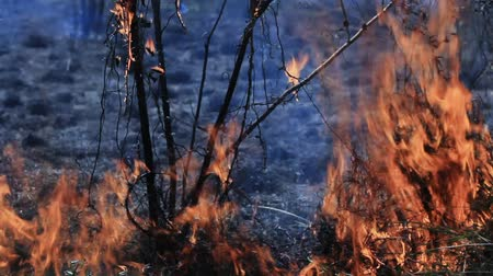 silvicultura : Flame of bushfire  with recorded sound.