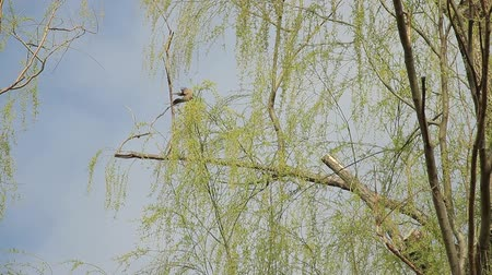 chill out : Weeping Willow and Wild Bird  Sky