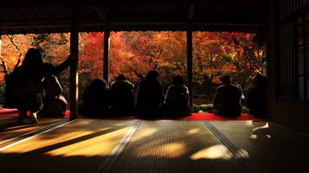 red maple : Tourists viewing red leaves at the traditional park at Enkouji temple in Sakyo district Kyoto Stock Footage