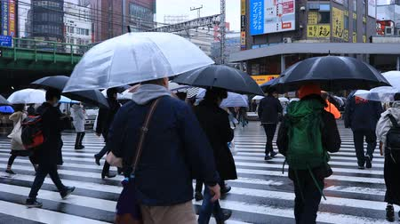 zebra : Walking people body parts at the crossing in Shinjuku Tokyo rainy day