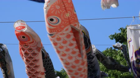 fly fish : Carp streamer at the park in Tokyo daytime sunny