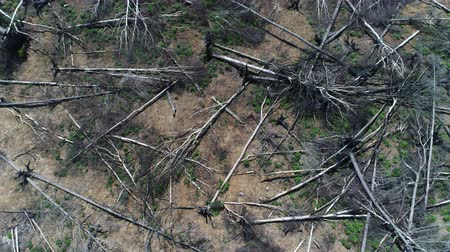 повреждение : Aerial view flying over destroyed cut forest