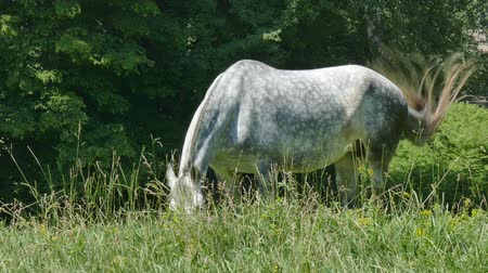 pastar : A horse eating grass in a pasture