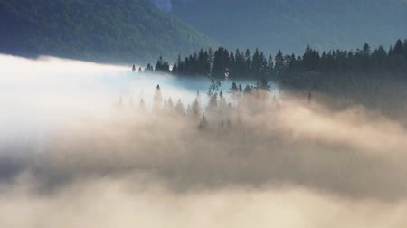 Mist and fog in mountain forest landscape time laspe