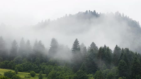 Mist and rain in mountain forest landscape time lapse Стоковые видеозаписи