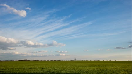 Green spring field with blue sky - Time lapse Стоковые видеозаписи