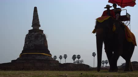THAILAND, AYUTTHAYA, 25 FEB 2018. Elephant riding in Ayutthaya. The tourist rode on elephant back to see the Pra Nakorn Sri Ayutthaya historical park on February