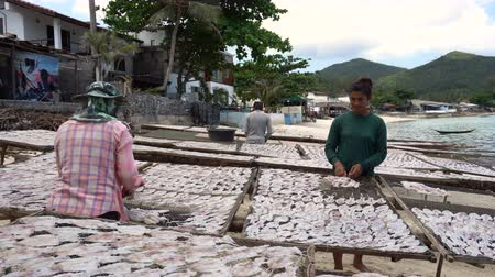 SAMUI, THAILAND, 5 MARCH 2018: Local Thai People Spreading Squids on Net For Drying. Production of Dry Seafood in Samui, Thailand. Стоковые видеозаписи