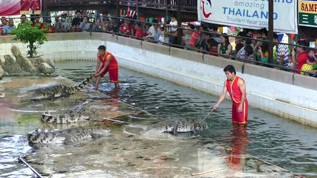 歯を見せる : NAKHON PATHOM, THAILAND - February    5 : Crocodile show at Samphran Crocodile Farm , it is one of the most impressive crocodile farm in the world at Nakhon Pathom , Thailand on February 5, 2019